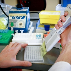 Preparation of Malaria Assay